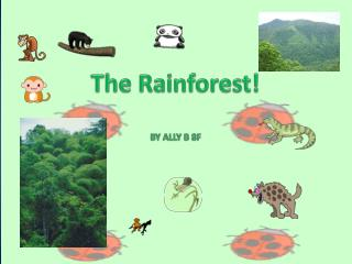 The Rainforest! BY ALLY B 8F