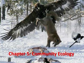 Chapter 5:  Community Ecology