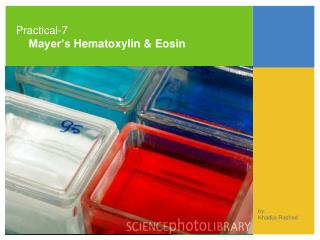 Practical-7 Mayer�s  Hematoxylin  & Eosin