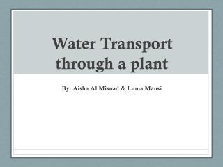 Water Transport through a plant