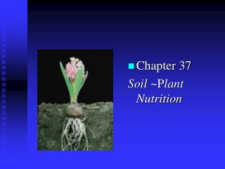 Chapter 37  Soil  ~P lant  Nutrition