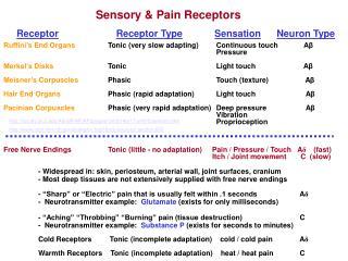Sensory & Pain Receptors