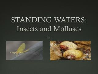STANDING WATERS: Insects and  M olluscs