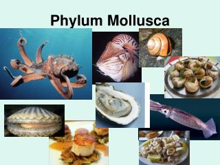 Pics For > Phylum Mollusca Examples