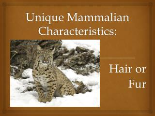 Unique Mammalian Characteristics: