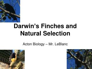 Darwin ' s Finches and Natural Selection