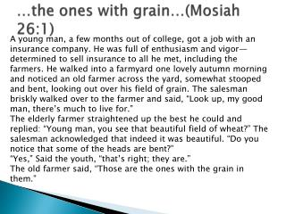 …the ones with grain…( Mosiah  26:1)