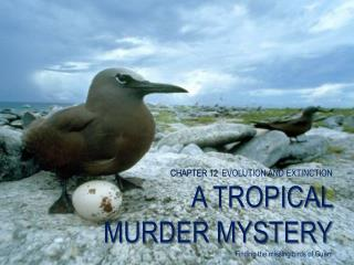 CHAPTER 12   EVOLUTION AND EXTINCTION A TROPICAL MURDER MYSTERY Finding the missing birds of Guam