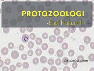 PROTOZOOLOGI - Blood Protozoa  II-