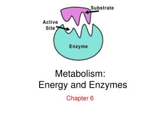Metabolism:� �Energy and Enzymes