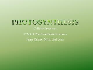 Cellular Processes 1 st  Set of Photosynthesis Reactions Jesse, Kelsey, Mitch and Leah
