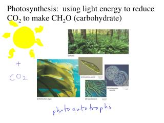 Photosynthesis:  using light energy to reduce CO 2  to make  CH 2 O (carbohydrate)