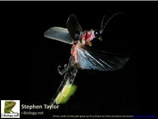 Stephen Taylor i-Biology.net