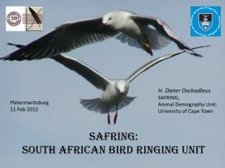 SAFRING: south  african  Bird ringing unit