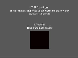 Cell  Rheology The mechanical properties of the bacterium and how they regulate cell growth