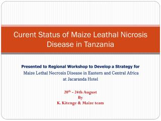 Curent Status of Maize Leathal Nicrosis  Disease in Tanzania