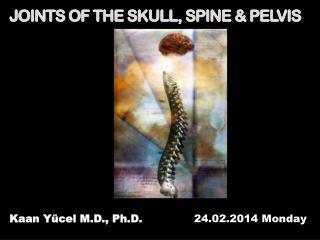JOINTS OF THE SKULL, SPINE & PELVIS