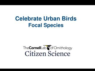 Celebrate Urban Birds Focal Species