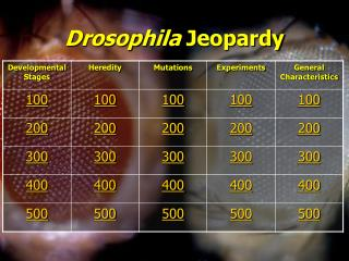 Drosophila  Jeopardy
