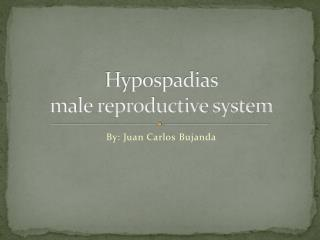 Hypospadias male reproductive system