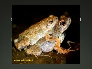 Signal Perception in Frogs and Bats and the Evolution of Mating Signals