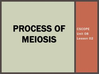 Process of  meiosis