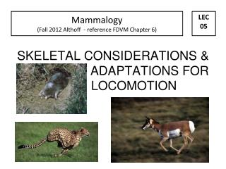 SKELETAL CONSIDERATIONS &                       ADAPTATIONS FOR                   LOCOMOTION
