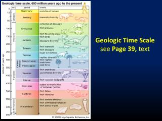 Geologic Time Scale s ee  Page 39,  text