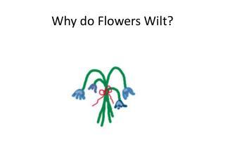 Why do Flowers Wilt?