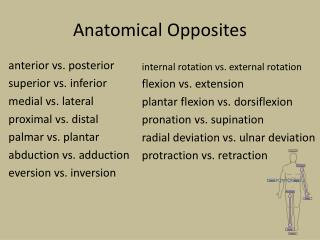 Anatomical Opposites