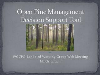 Open Pine Management Decision Support Tool
