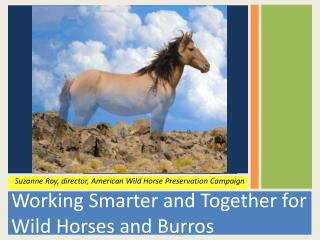 Working Smarter and Together for Wild Horses and Burros