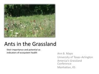 Ants in the Grassland