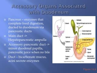Accessory Organs Associated with Duodenum