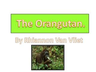The Orangutan.