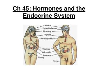 Ch 45: Hormones and the Endocrine System