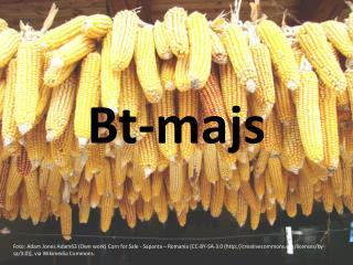 Bt-majs
