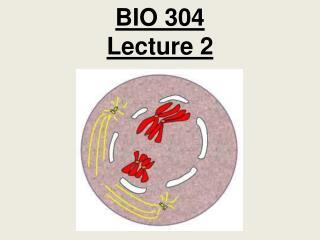 BIO 304  Lecture 2