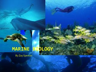 M arine Biology