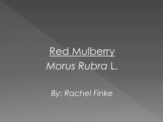 Red Mulberry Morus Rubra L. By : Rachel Finke