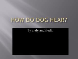 How do dog hear?