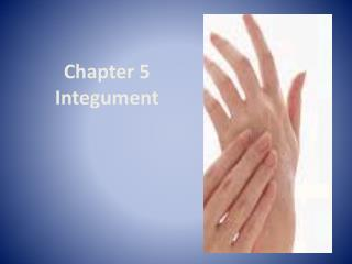 Chapter 5  Integument