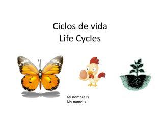 Ciclos  de  vida Life Cycles