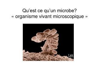 Qu est ce qu un microbe   organisme vivant microscopique