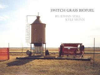 Switch grass Biofuel