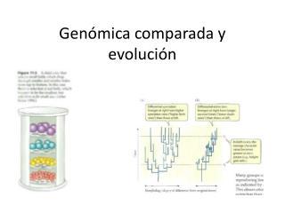 Genómica comparada y evolución