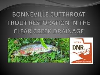 BONNEVILLE CUTTHROAT TROUT RESTORATION IN THE CLEAR CREEK DRAINAGE