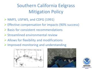 Southern California Eelgrass  Mitigation Policy
