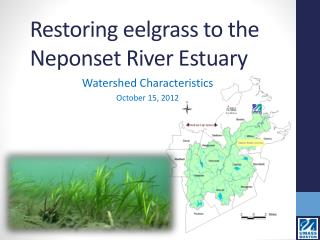 Restoring eelgrass to the Neponset River Estuary