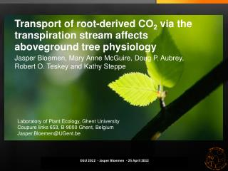 Transport of root-derived CO 2  via the transpiration stream affects aboveground tree physiology